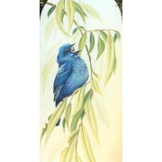 Indigo Buntings and Willow