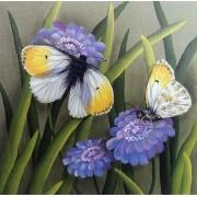 Orange Tip Butterfly & Scabiosa Flowers