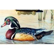 Wood Duck-Drake