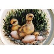 Little Hatchlings